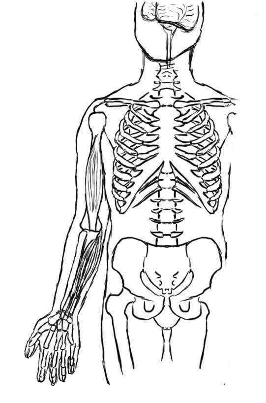 Fein Bewegungen Des Körpers Anatomie Fotos - Anatomie und ...